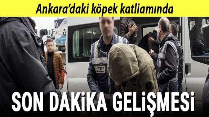 Ankaradaki köpek katliamında yeni gelişme