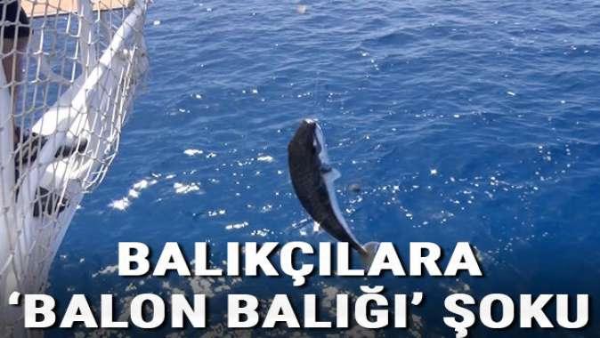 Antalyada balıkçılara balon balığı şoku