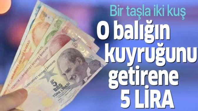 Balon balığı avcılığını desteklemek için her kuyruğa 5 lira ödenecek