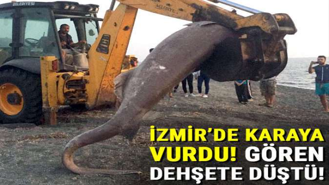 İzmir'de karaya vurdu! Gören dehşete düştü...