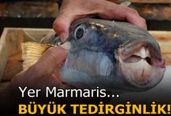 Marmaris'te balon balığı artışı tedirginlik yarattı