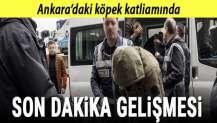 Ankara'daki köpek katliamında yeni gelişme