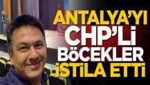 Antalya'yı CHP'li Böcekler istila etti