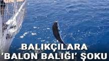 Antalya'da balıkçılara 'balon balığı' şoku