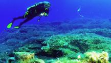 Antalya'da dalış turizmi sezonu açıldı Kaynak: Antalya'da dalış turizmi sezonu açıldı