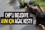 CHP Eskişehir ve Tekirdağ'da ağaç kıyımı yaptı!