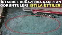 İstanbul Boğazı'nda şaşırtan görüntüler! İstila ettiler...