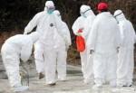 Kastamonu'da kuş gribi virüsü tespiti
