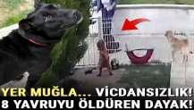 Muğla'da kahreden olay! 8 yavruyu öldüren dayak…