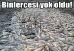 Obruk Barajı'nda toplu balık ölümü