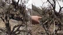 PKK'lı hainlerin ağaçlardaki gözetleme kuleleri ortaya çıktı