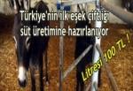 Türkiye'nin ilk eşek çiftliği süt üretimine hazırlanıyor