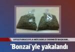 Uyuşturucuyla Mücadele Derneği Başkanı 'bonzai'yle yakalandı