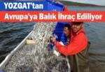 Yozgat'tan Avrupa'ya Balık İhraç Ediliyor
