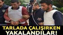 YPG'li terörist kardeşler tarlada çalışırken yakalandı